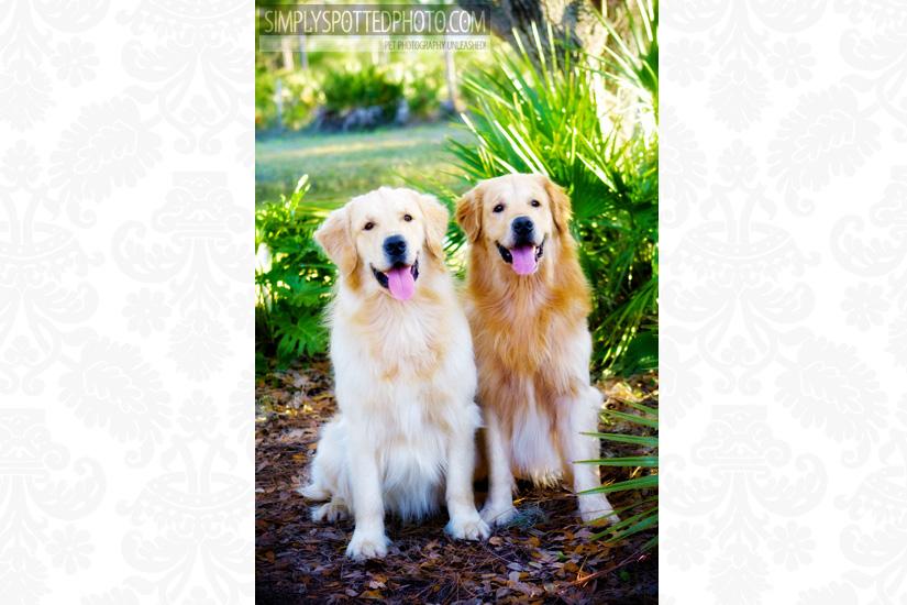 Riley & Finn - Golden Retrievers