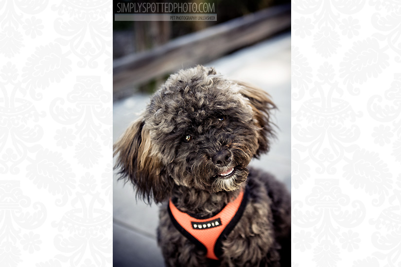 Bradenton Dog Photography