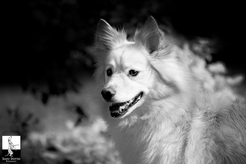Suzi - Pet Photography