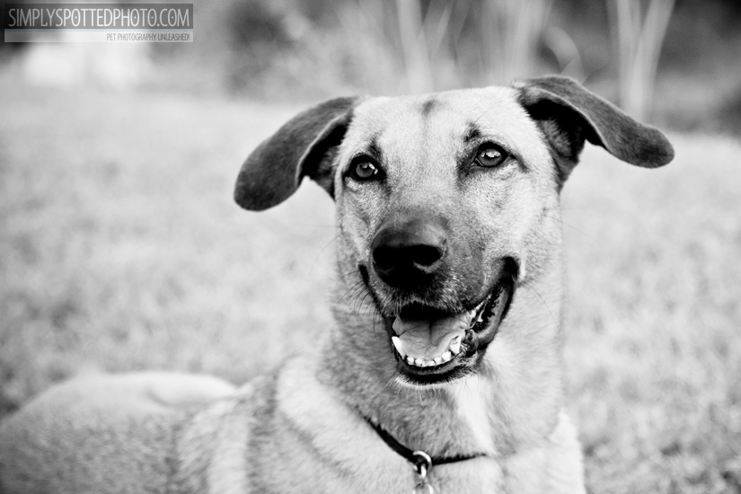 Florida Dog Photography
