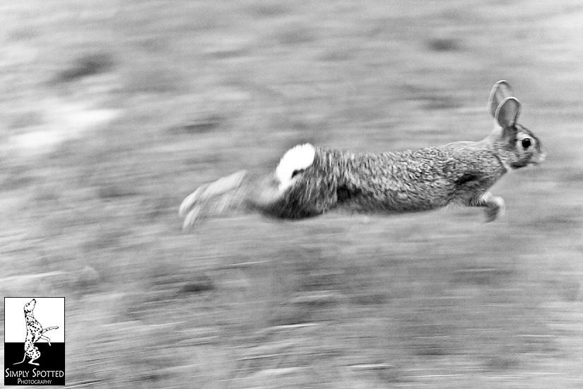 run bunny!