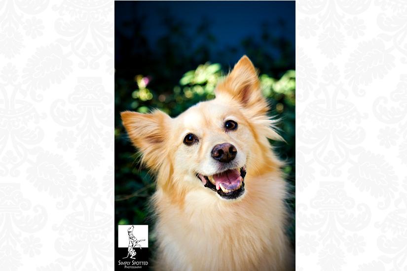 Tampa Pet Photography