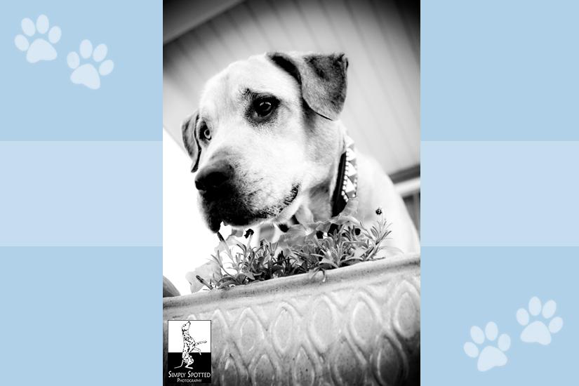 Mackey - Indiana Pet Photography