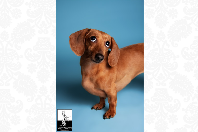 Sarasota Pet Photograpy