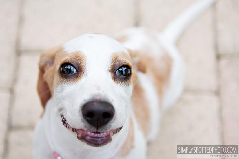 Puppy Teeth!