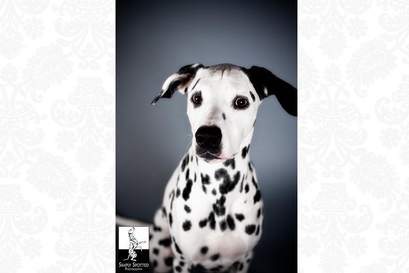 Sarasota Pet Photographer