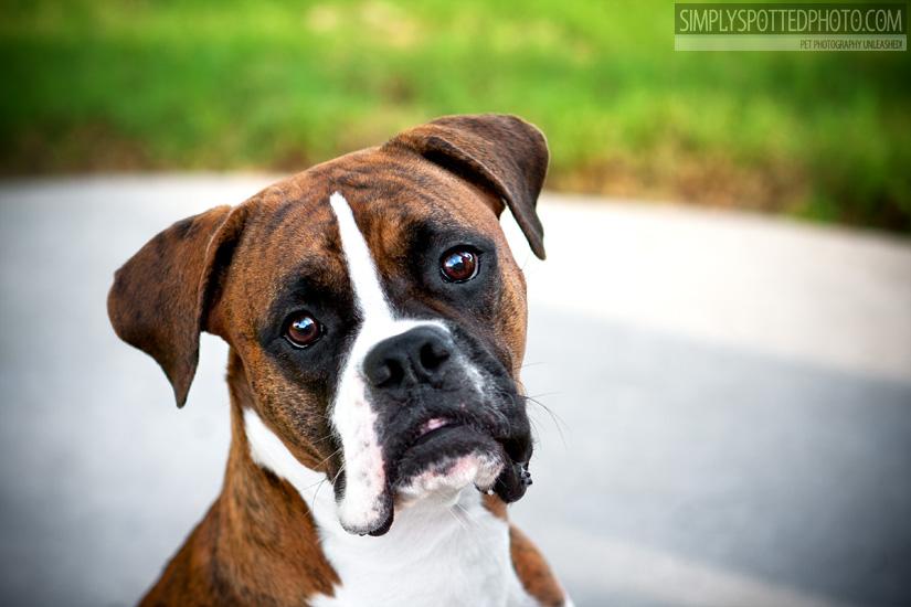 Tampa Dog Photography