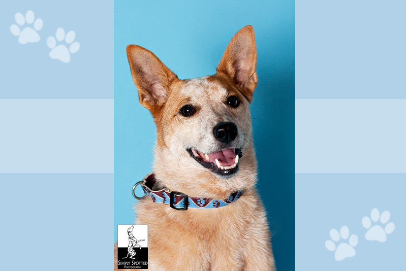 GulfCoast DOG Pet Extravaganza