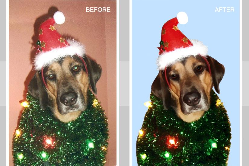 Pet Photo Enhancement