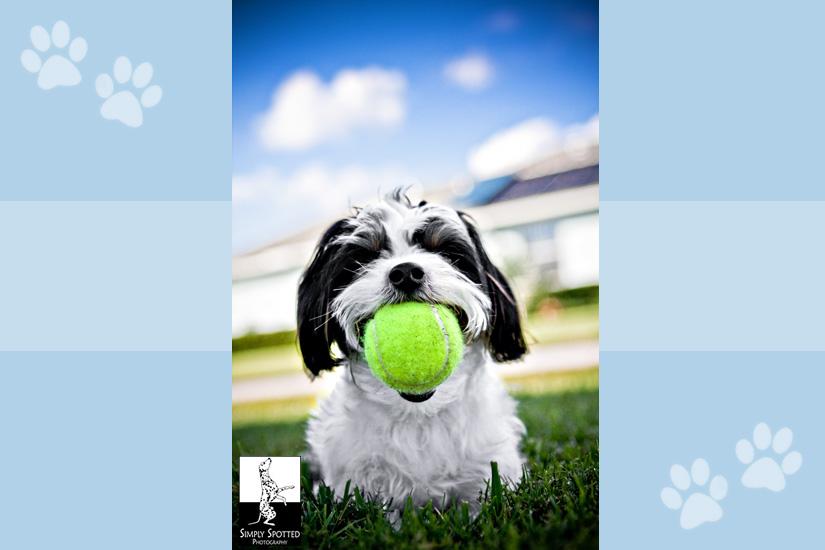 Tennis Ball Fanatic