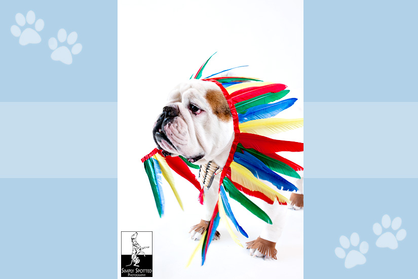 Halloween Bulldog