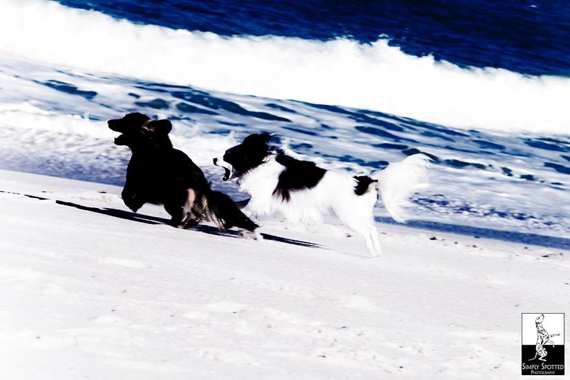 Vero Beach Pet Photography