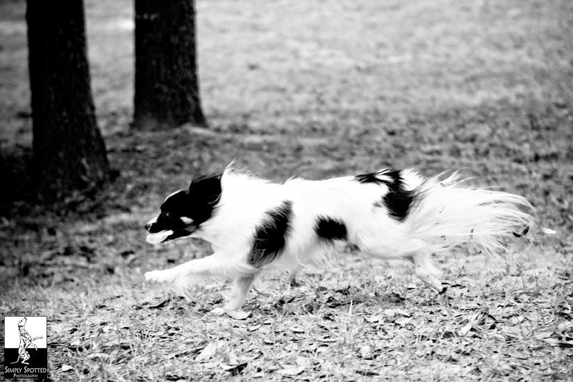Run Bella Run