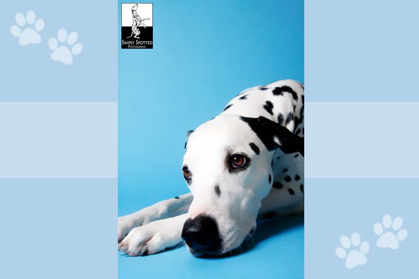 Peyton - Dog Photography