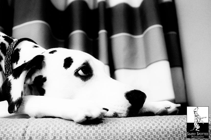 Bored Spotty!