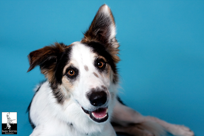 The GulfCoast DOG Pet Extravaganza