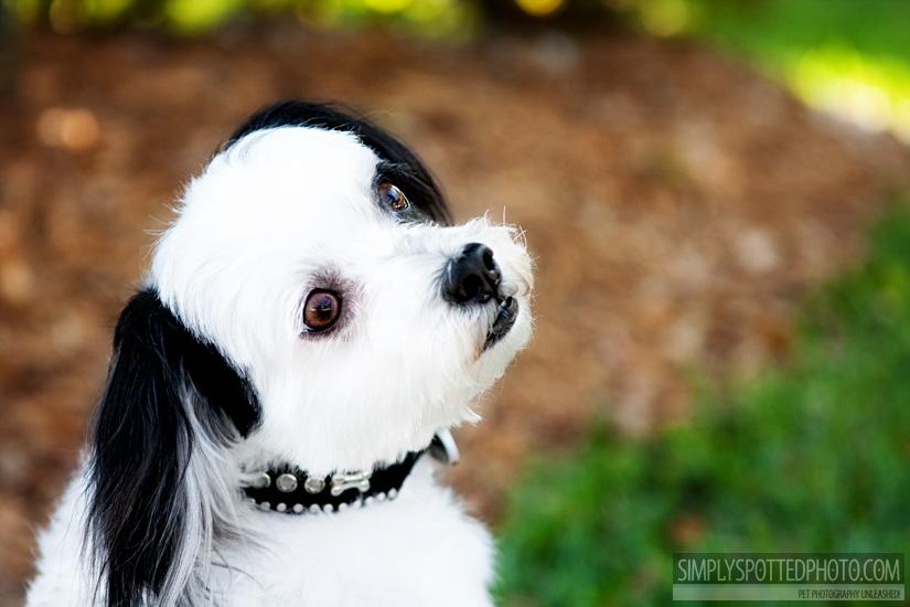 Sarasota Pet Photography