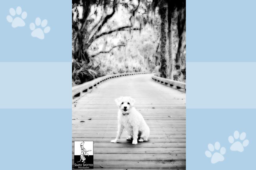 Lakewood Ranch Pet Photographer