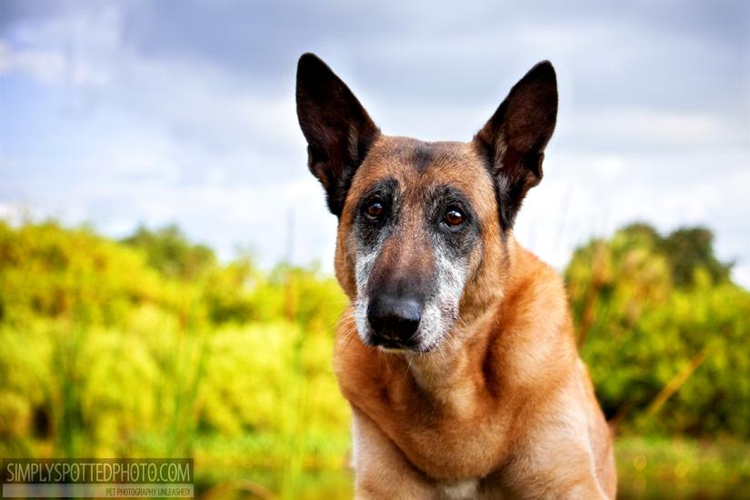 Bradenton Pet Photography