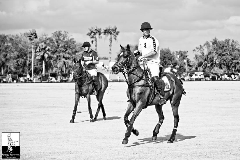 Sarasota Polo Ponies!