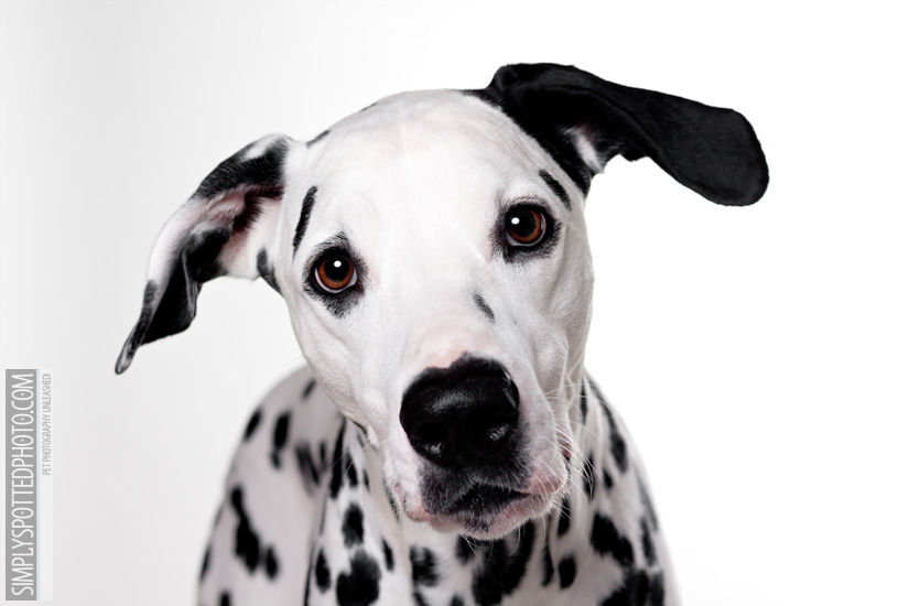 Florida Dog Photography