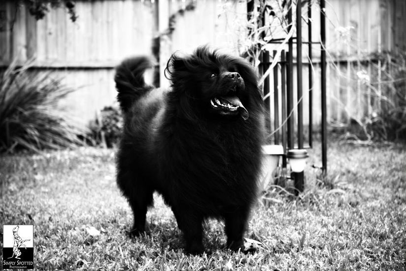 Venice Pet Photography