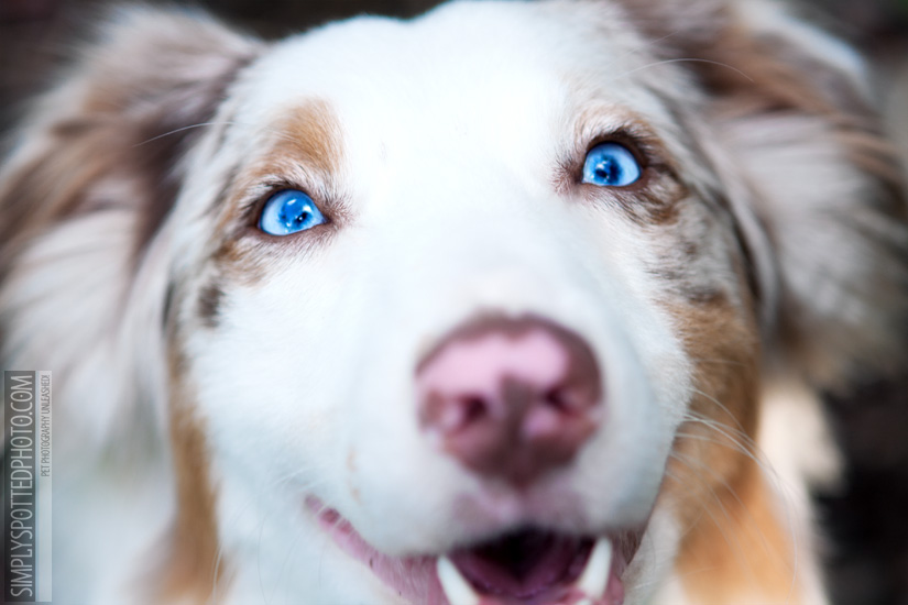 Aussie Blue Eyes