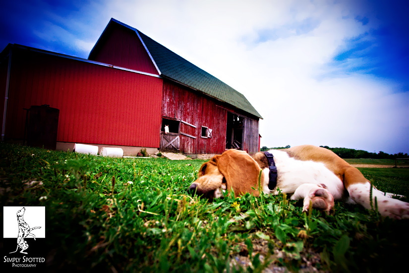 Napping on the Farm