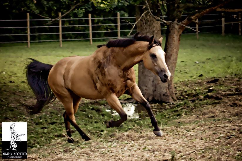 Maya - Horse Photography