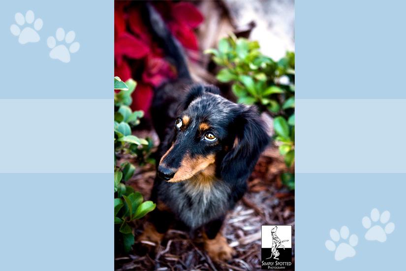 Mikey - Vero Beach Pet Photography
