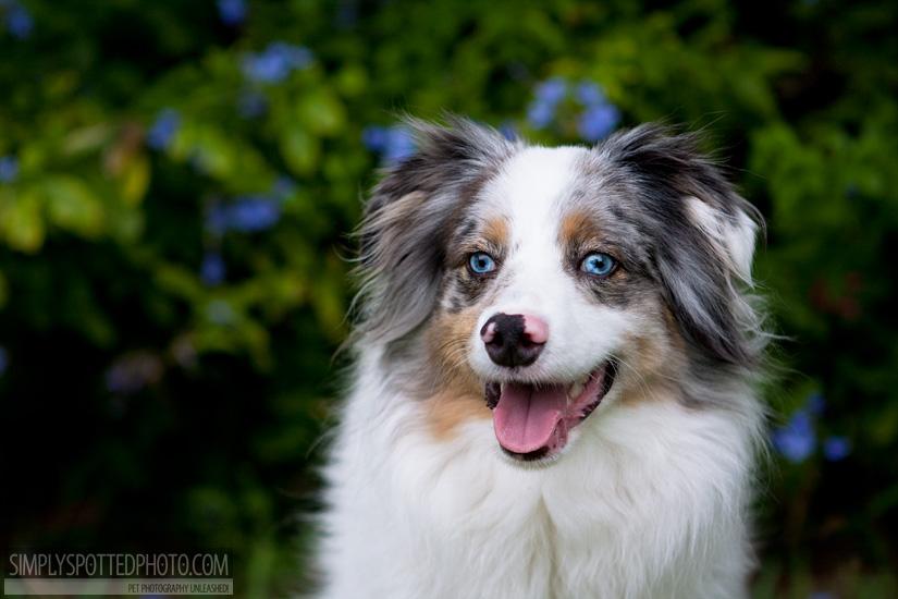 Florida Dog Photographer