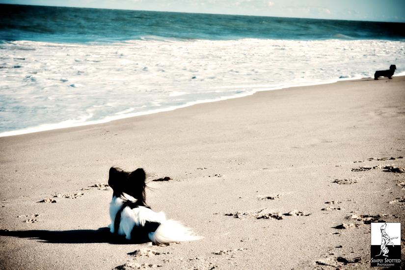 Florida Pet Photography