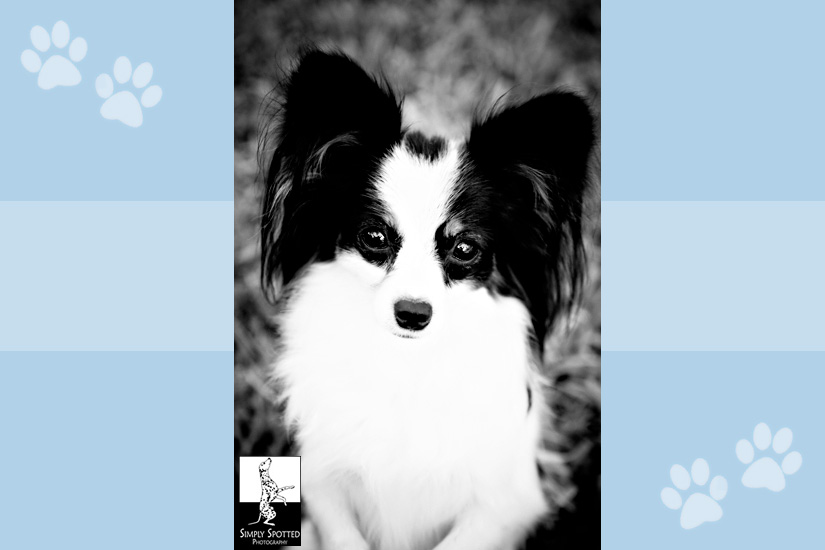 Tulip - Pet Photography