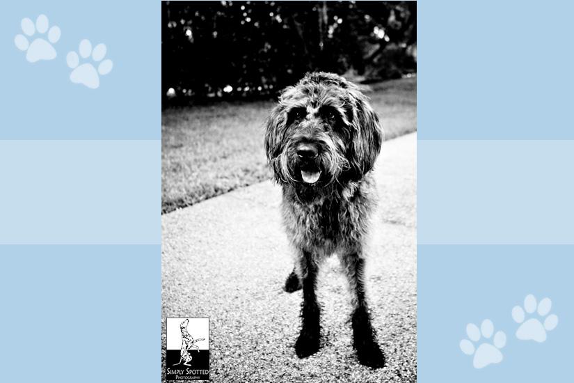 Dixie - Sarasota Pet Photography