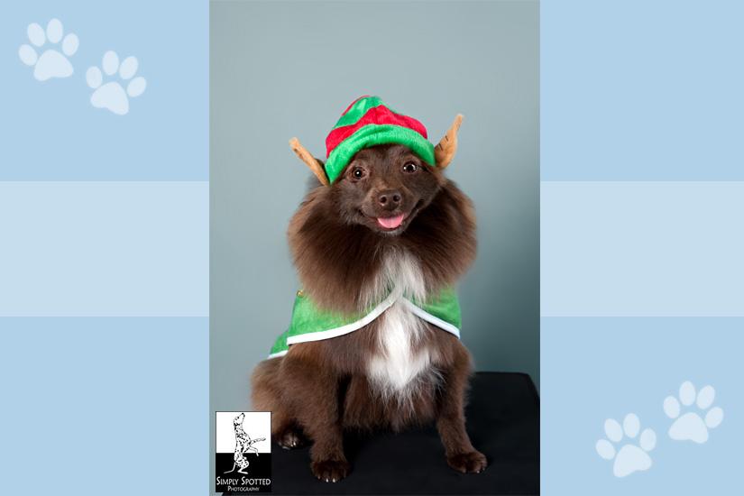 Hershey the Elf